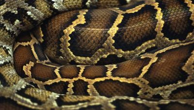 Types of Snakes in the Philippines   Animals - mom.me