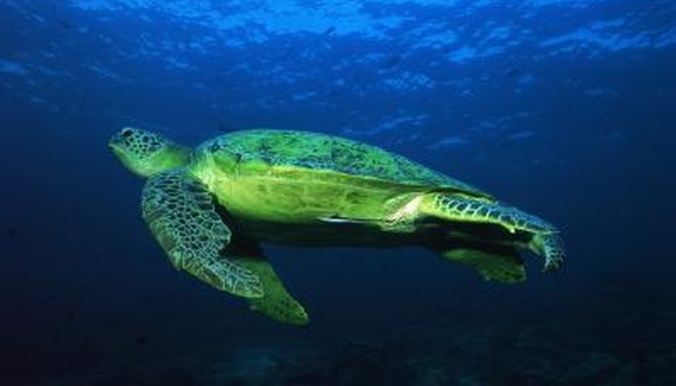 Do Turtles Come In Different Sizes Amp Colors Animals
