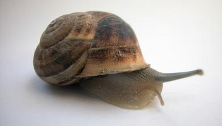 What Is The Meaning Of Mollusca Animals Mom