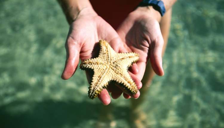 Choosing the right college for marine biology is a critical step.