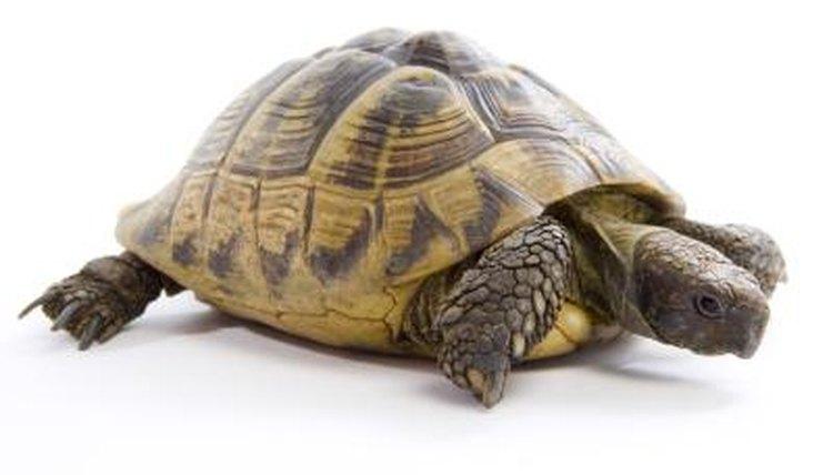 The Best Heat Lights For Tortoises Animals Mom Me