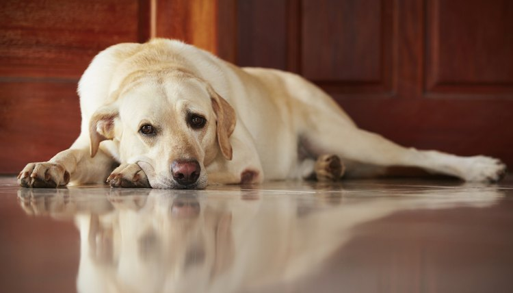 What Are The Signs Of Kidney Failure In Senior Dogs
