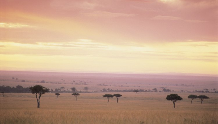The Maasai Mara National Reserve in Kenya includes savanna as habitat for big cats and zebra.