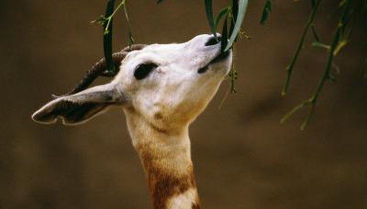 Endangered species in the sahara desert animals mom jupiterimagesphotosgetty images fandeluxe Gallery