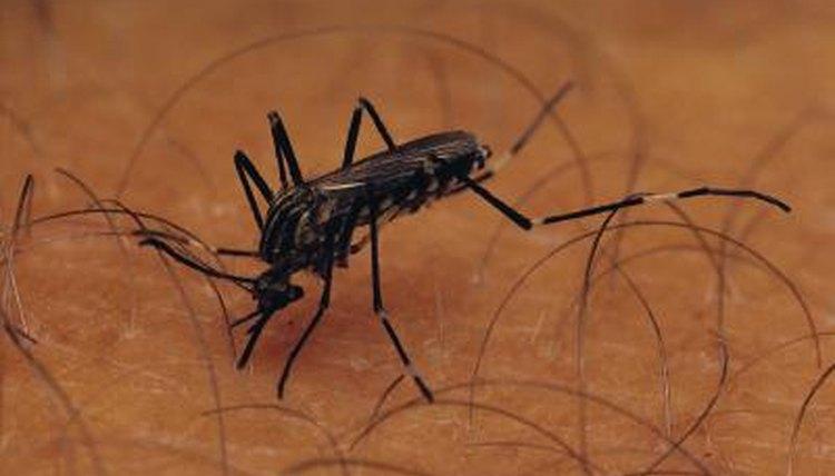What sex of mosquito bites
