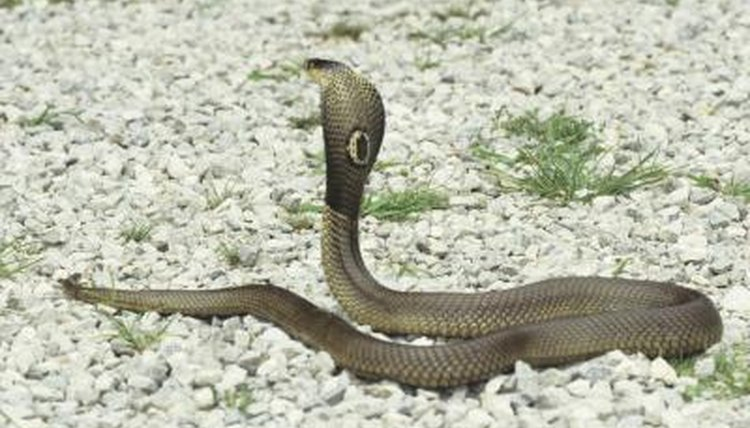 Deadly Snakes in Southern China | Animals - mom.me