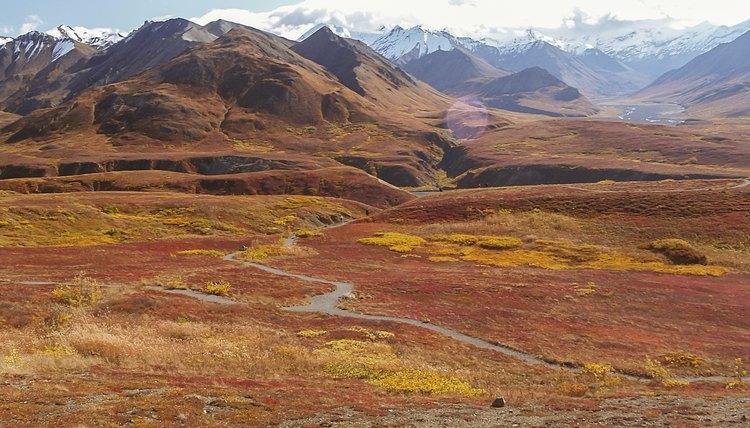 Tundra Characteristics   Sciencing