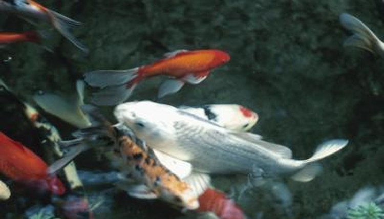 What type of gravel is good for a koi pond animals for Como hacer un lago artificial