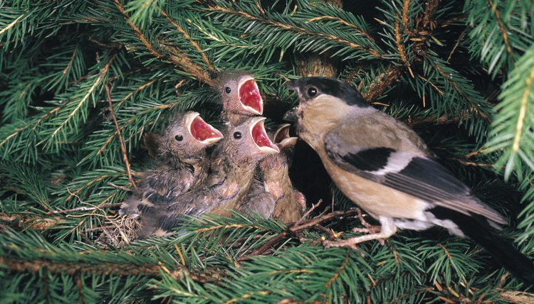 How To Care For House Finch Babies Animals Mom Me