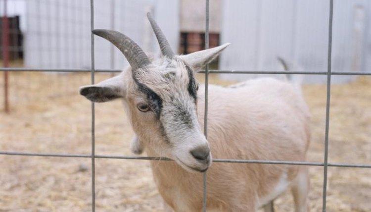 diy goat shelter | animals - mom
