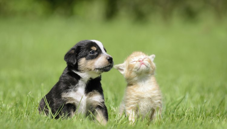 Raising A Kitten Amp Puppy Together Animals Mom Me