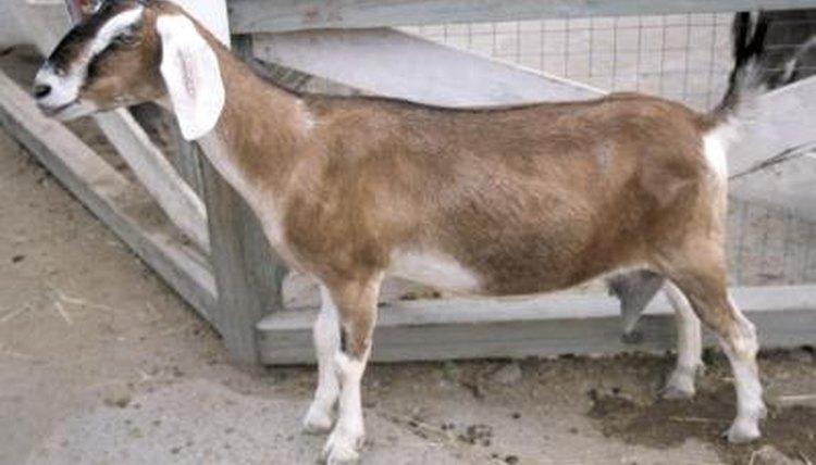 How To Build A Goat Trough Animals Mom Me