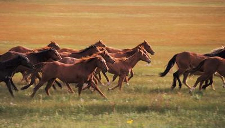 Breed Characteristics of Mustang Horses | Animals - mom.me