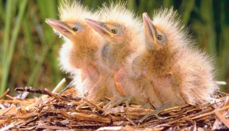 Image result for baby bird images