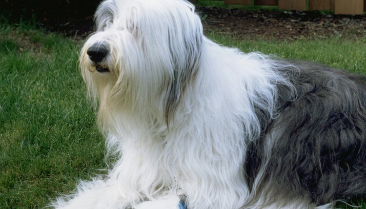 Best Clippers For Long Haired Dogs