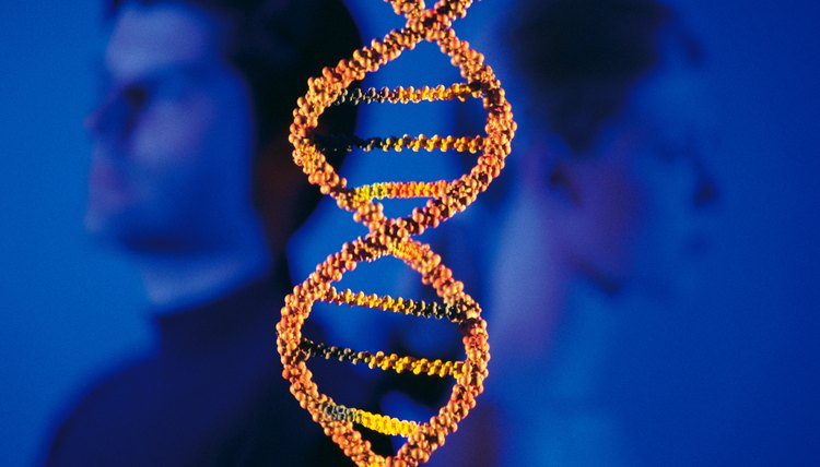 Genes which arise from a common ancestral gene are considered to be homologous.