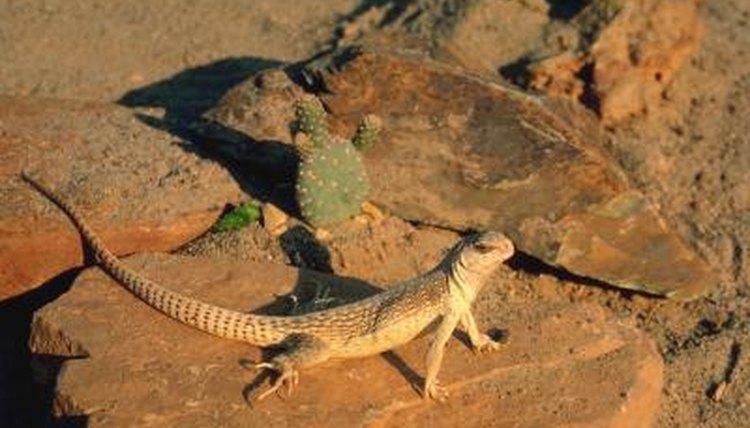 Australian Desert Animals  Wildlife In The Outback