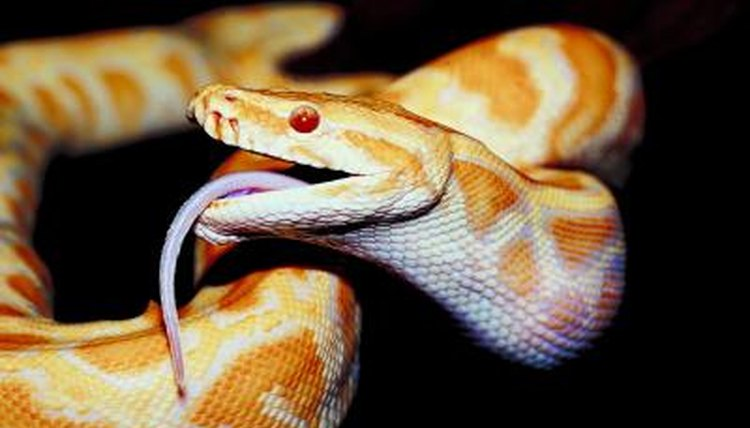 Types of Snakes That L...