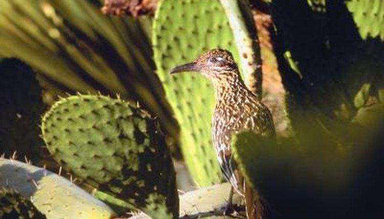Birds Of The Sonoran Desert Animals Mom Me