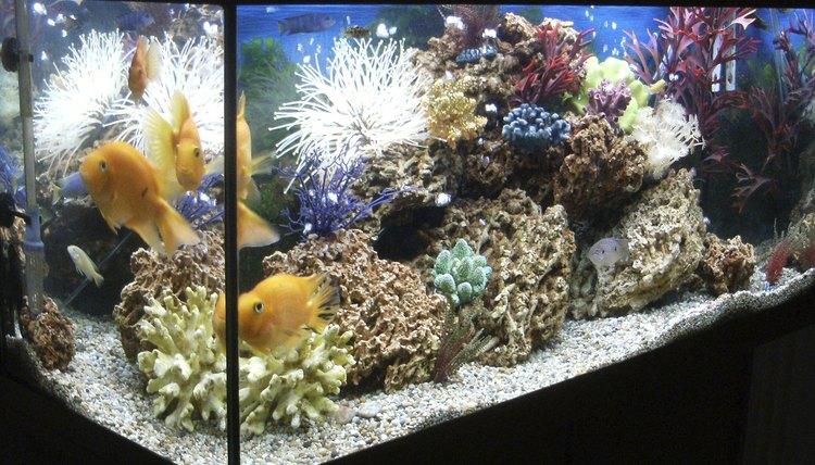 Nekton Fish A List of the Differen...