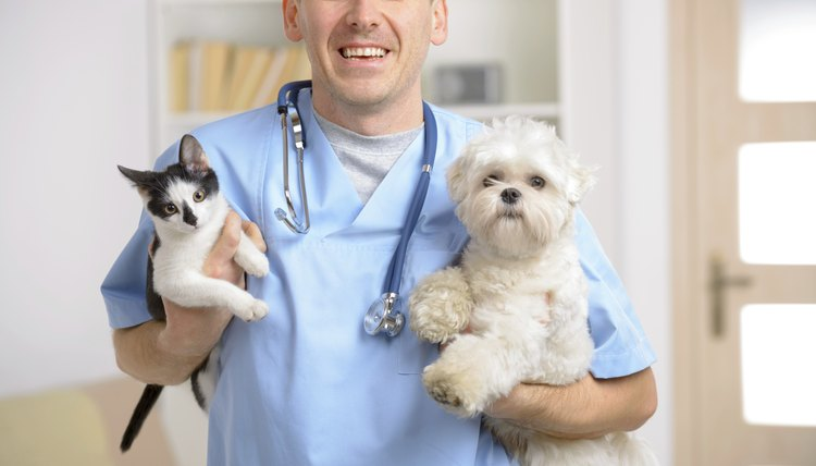 Flagyl Side Effects In Cats