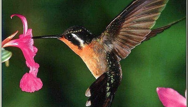 Make your own nectar to feed birds