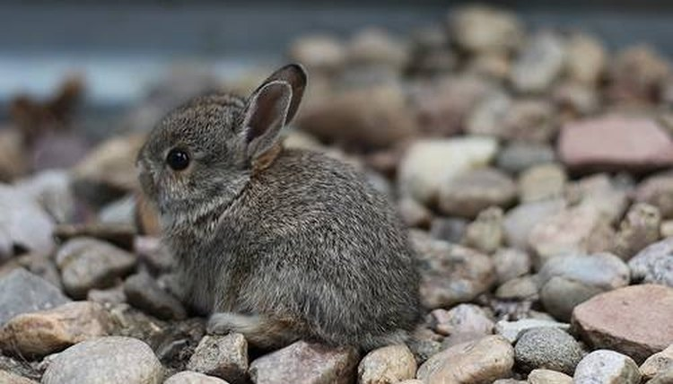 Somewhere, this baby bunny has feet