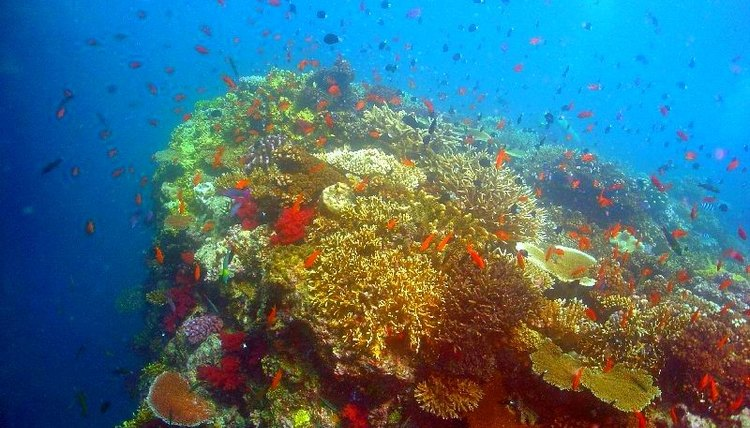 Why Coral Reefs Come in Many Colors