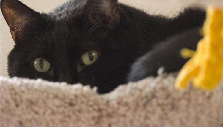 world's best cat litter cheapest