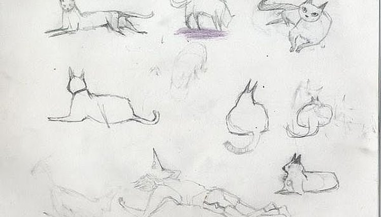 A pencil drawing of a cat in several poses.