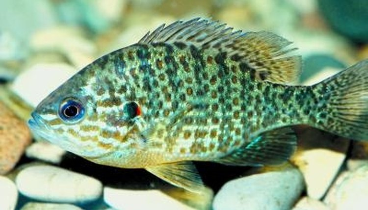 Freshwater aquarium fish thrive in water that ranges from slightly acid to slightly alkaline.