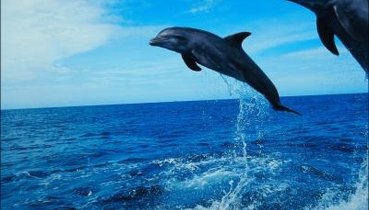 Whales, dolphins and porpoises - What's the difference?