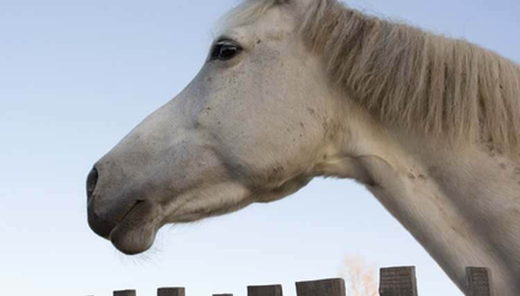 Swollen lymph nodes may be a sign of strangles, an equine disease.