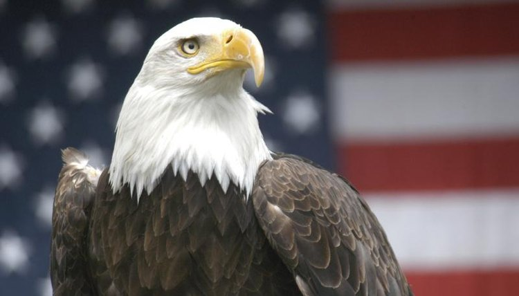 Bald eagle in front of an American flag.