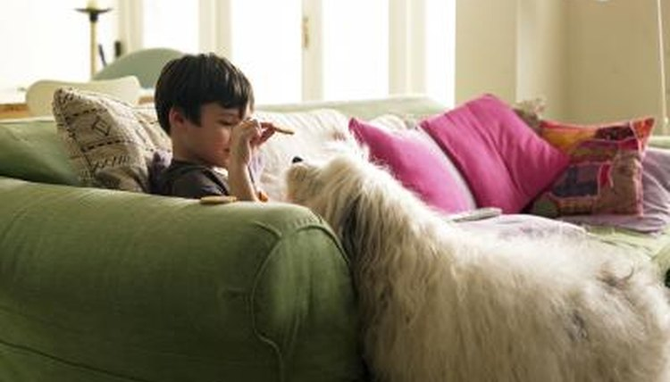 A boy gives his dog a biscuit in the living room.
