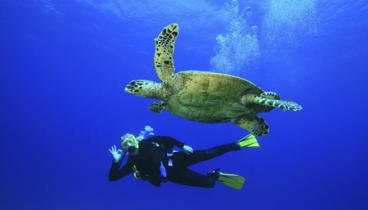 A diver and sea turtle swimming side by side.