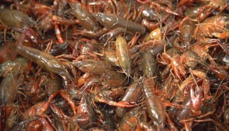 Crawfish are a popular food item.