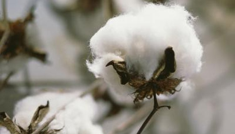 Differences in processing can affect the quality of cotton materials.