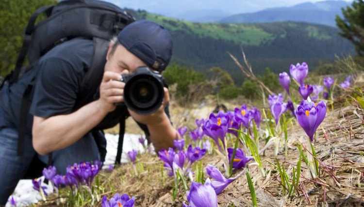A high school student takes photographs of flowers for a nature club.