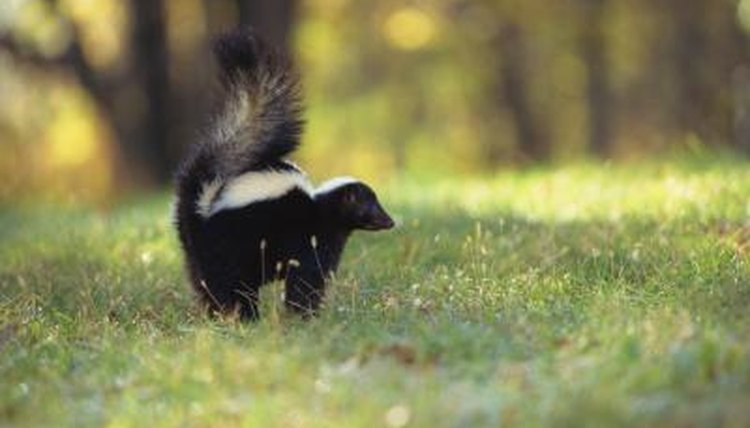 A List of Animals Native to New York | Sciencing