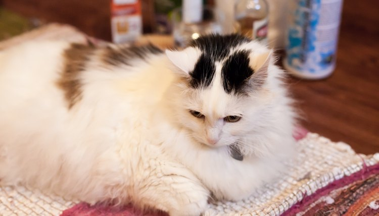 How To Clean Cat Urine With A Baking Soda Dish Soap