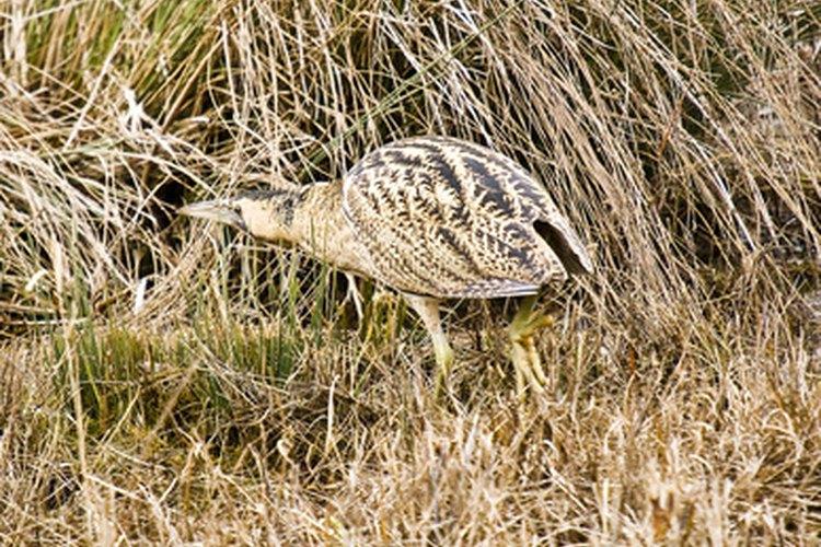 Hechos del halcón de Harris: Animales de América del Norte - WorldAtlas.com