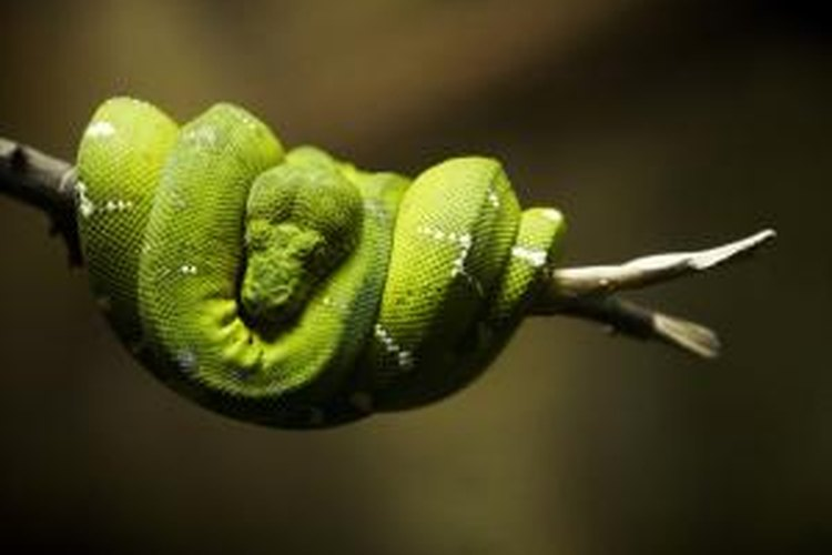 Snakes are found in many natural habitats and are good at navigating in tight spaces.