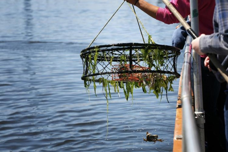 Crab fishing is a popular activity in Washington.