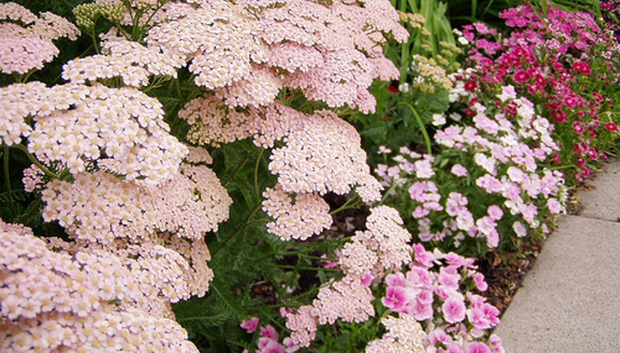 Border with yarrow and pinks