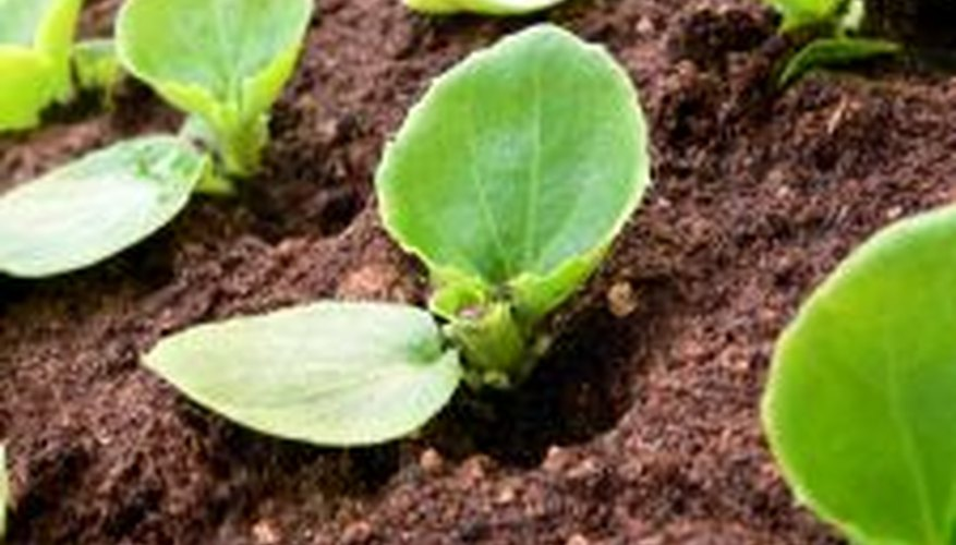Space seeds in flats to avoid overcrowding when they sprout