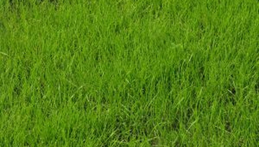 Healthy grass depends on good soil preparation.