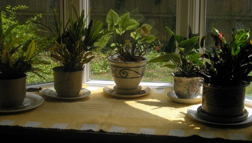 Window gardens can add warmth and beauty to urban environments or winter windows.