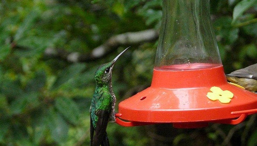A moat keeps ants from bugging your hummingbird visitors.