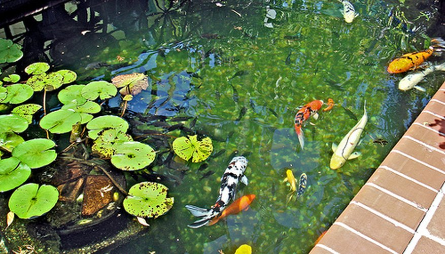 Ultraviolet lights can help keep your pond crystal clear.